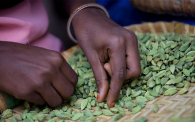 Why You Should Look for the Fairtrade Mark when Shopping for Products